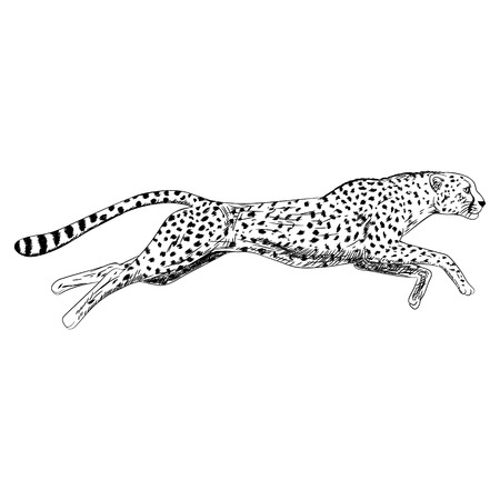 Hand drawn sketch of running cheetah. Vector illustration. Vettoriali