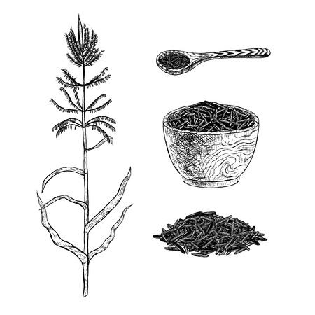 Hand drawn set of wild rice. Vector sketch Illustration