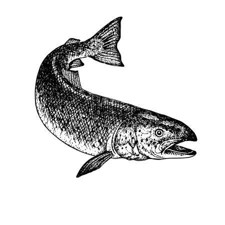손으로 그린 된 연어입니다. 레트로 스케치 절연입니다. 빈티지 hypster 이미지입니다. 낙서 라인 그래픽 디자인. 흑인과 백인 물고기 연어를 그리기 일러스트