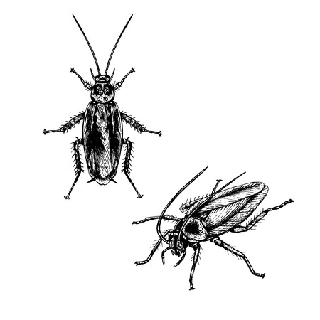 Hand drawn set of cockroach. Realistic isolated sketch of animal. Line graphic design. Black and white drawing insect. Vector illustration.