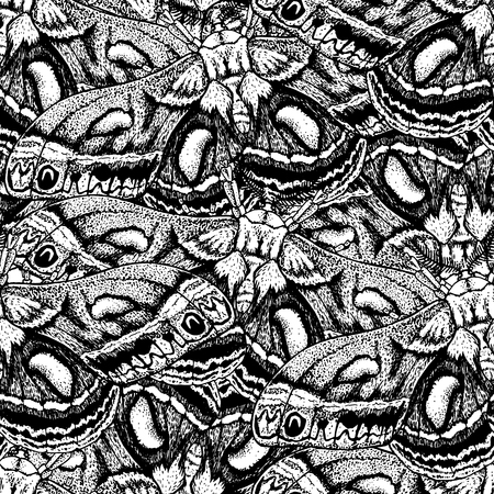 Hand drawn background with moth. Vector seamless pattern with bloodworm. Butterfly in vintage style. Doodle line graphic design. Black and white drawing insect. Vector sketch. Illustration