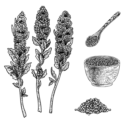 Hand drawn set of quinoa plant porridge in bowl, spoon and seeds. Retro isolated sketches. Vintage figure. Linear graphic design. Black and white image. Vector illustration.