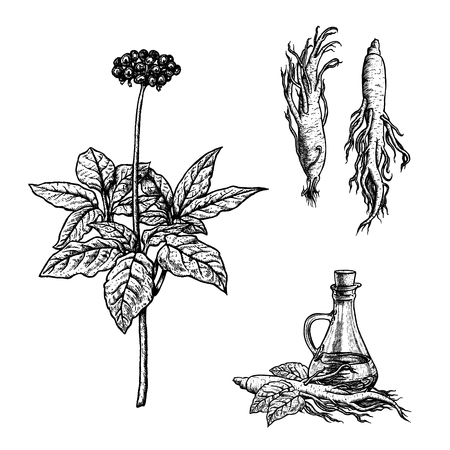 Hand drawn set of ginseng plant, oil and roots. Retro isolated sketches. Vintage figure. Linear graphic design. Black and white image. Vector illustration.