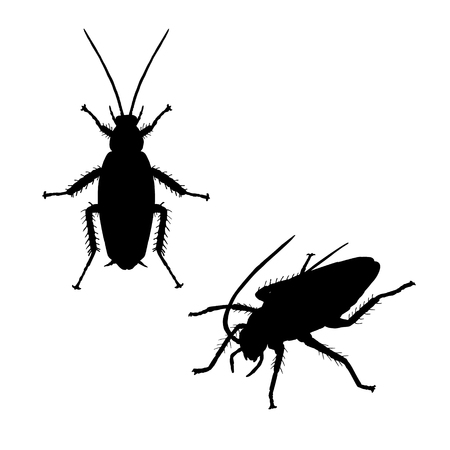 Silhouette of cockroach. Icon of insect. Line graphic design. Black and white image. Vector illustration.