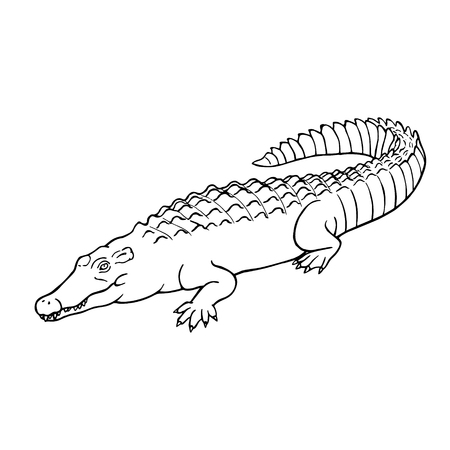 Hand drawn crocodile. Linear style. Can be used as a coloring book. Vector illustration. Line drawing Ilustração