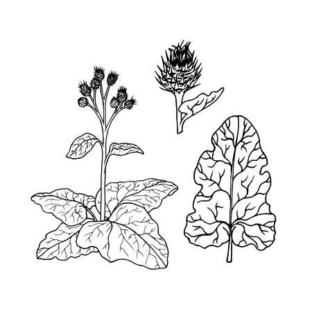 Linear set of burdock. Line drawing. Black and white image. Vector illustration.