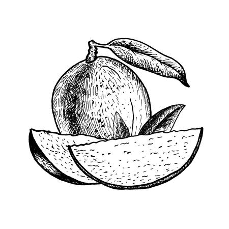 Hand drawn set of mango.