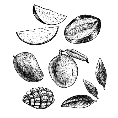 Hand drawn set of mango. Vetores