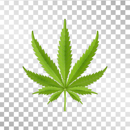 Hemp leaf isolated on transparent background. Realistic marijuana. Green leaf. Cannabis plant. Vector Illustration
