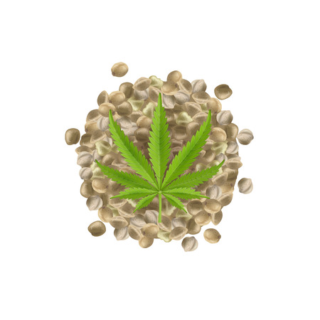 Realistic hemp seeds with leaf on white background. Marijuana bunch. Cannabis huddle. Vector illustration.