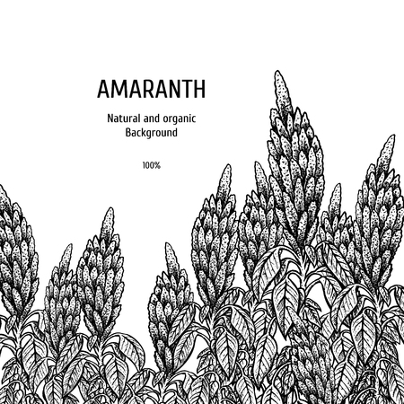 Hand drawn background with amaranth. Retro sketches. Vintage design. Layout for package. Black and white mockup. Vector illustration. Ilustracja