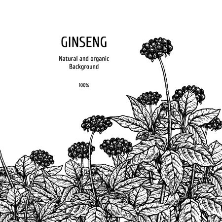 Hand drawn background with ginseng. Retro sketches. Vintage design. Layout for package. Black and white mockup. Vector illustration.
