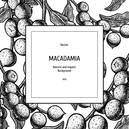 Hand drawn background with macadamia nut. Retro sketches. Vintage design. Layout for package. Black and white mockup. Vector illustration. Illustration