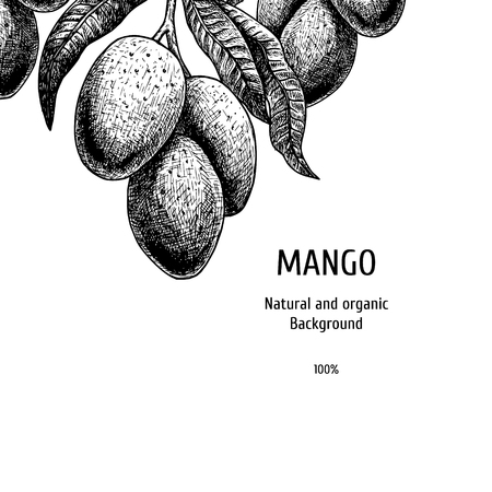 Hand drawn background with mango.