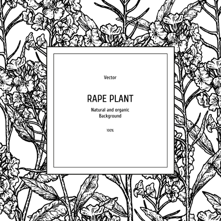 Hand drawn background with rape plant. Retro sketches. Vintage design. Layout for package. Black-white mockup or frame. Vector illustration. Ilustração