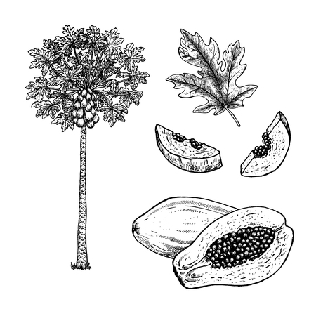 Hand drawn set of papaya, leaves and pieces. Isolated sketches. Vintage figure. Linear graphic design. Black-white drawing image. Vector illustration.