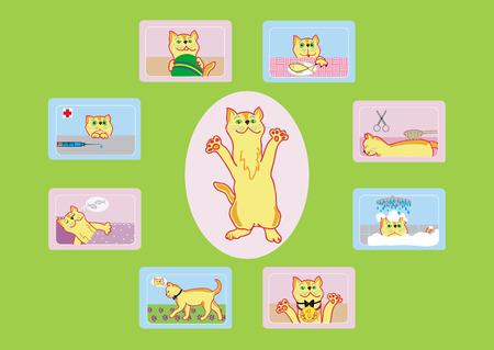 blanket fish: Cats life