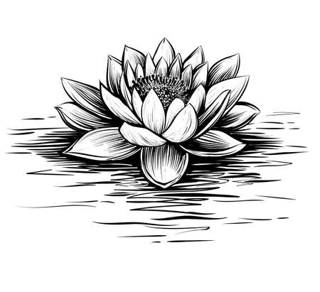 lily pad: Vector water lily. Lotus illustration. Black and white graphic art line. Linocut style.