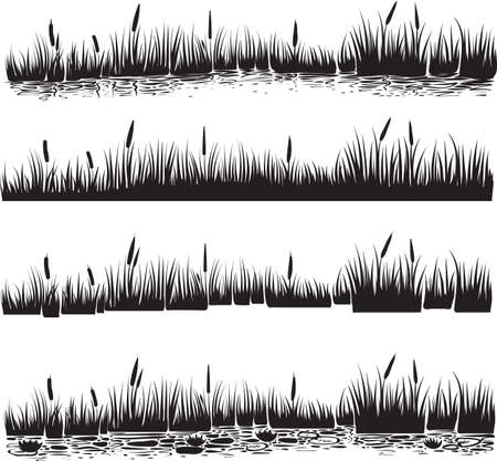 Vector illustration of reed, typha. Scene with reeds and water waves in the pond. Black and white graphic art line. Silhouette set of reed.