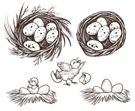 Nest set and hatching chicken. Vector drawing. Illustration