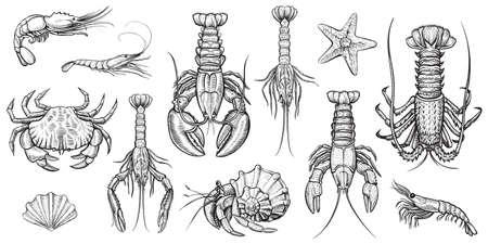 crustaceans: Crustaceans vector illustrations set.