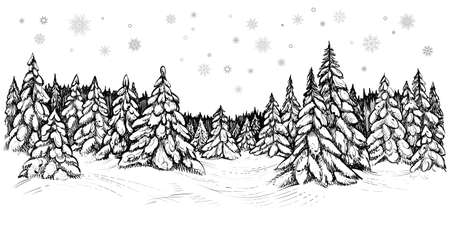 Vector illustration of snowy firs. Winter forest covered with the snow, hand drawn sketch.