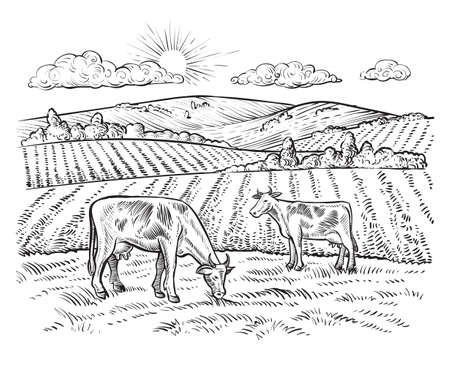 Rural landscape with cows. Vector vintage farm.