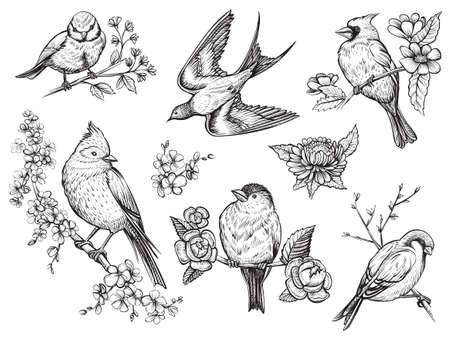 Birds hand drawn illuatrations in vintage style with spring blossom flowers. Ilustração