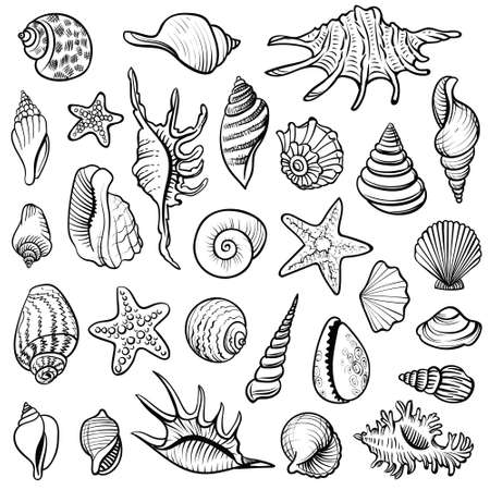 Sea shells vector line set. Black and white doodle illustrations. Vettoriali