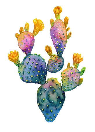 Watercolor hand drawn cactus. Blooming opuntia.