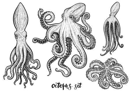 Ilustraciones vectoriales dibujadas a mano de pulpo. Boceto grabado negro aislado sobre fondo blanco.