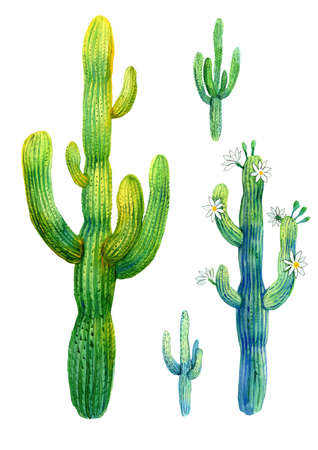 Cactus watercolor illustration of blooming saguaro on white background. Stock Photo