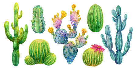 Cactus set watercolor isolated illustration.