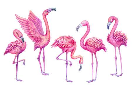Flamingo watercolor tropical set. Exotic paradise birds illustration.