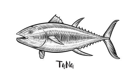 Tuna fish hand drawn vector illustration. Black engraving line emblem.