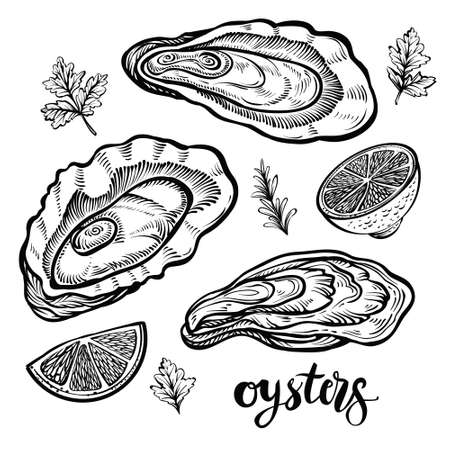 Oysters vector illustration. Black line sketched seafood isolated on white background.