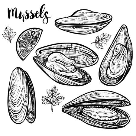 Mussels vector illustration. Seafood isolated sketch on white background.