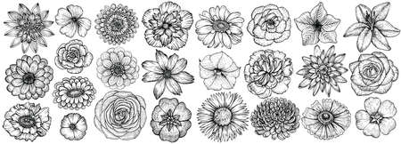 Hand drawn flowers, vector illustration. Big set of different types garden flowers in sketch style. Ilustracja