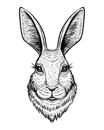 Head of rabbit or hare hand drawn vector sketch. Line illustration isolated on white background. Çizim