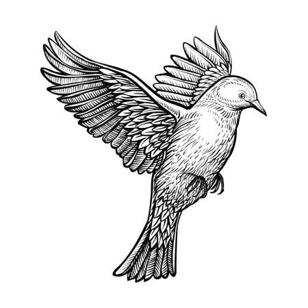 Vector hand drawn flying pigeon. Sketch of white dove.