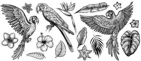 Parrots with tropical flowers, hand drawn line vector collection. Macaw flying parrot and sitting ara. Paradise exotic flowers and leaves. Engraving art design, isolated elements on white background Çizim