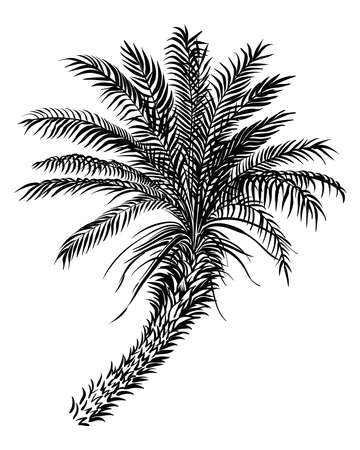 Palm tree sketch silhouette. Vector black lined illustration.
