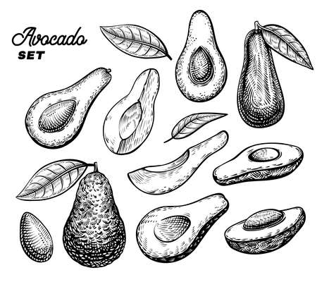 Avocado vector engraving sketch. Half of avocado, whole fruit, its slice and pieces.