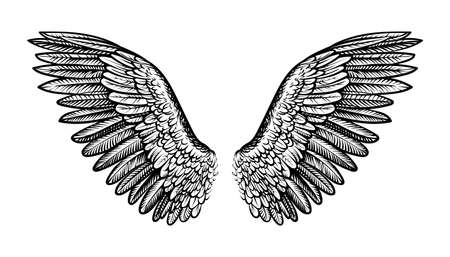 Pair of spread out wings, vector illustration. Çizim