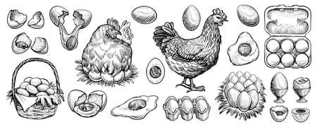 Chicken eggs and farm hen hand drawn vector. Engraved elements: nest, full basket, broken, boiled, fresh and other eggs. Standard-Bild - 140489756