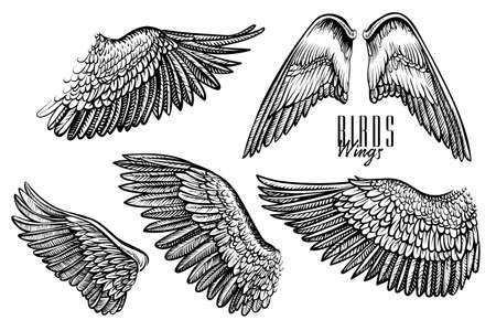 Wing of bird or angel, hand drawn vector. Black line engraved set for  emblem, tattoo or vintage design.