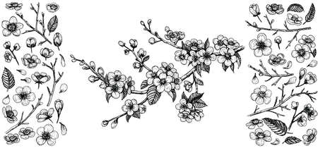 Blooming cherry branch, vector illustration and big set of design elements: flowers, leaves, petals, buds. Çizim