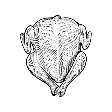 Whole raw chicken or turkey, vector sketch. Hand drawn poultry carcass, broiler meat. Çizim