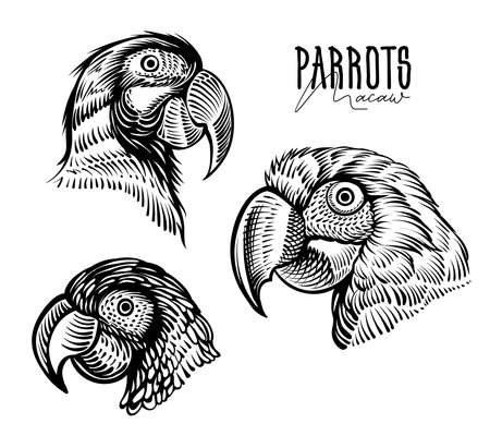 Parrots heads, vector drawings. Black and white macaw, engraving illustration. Banque d'images - 144132760