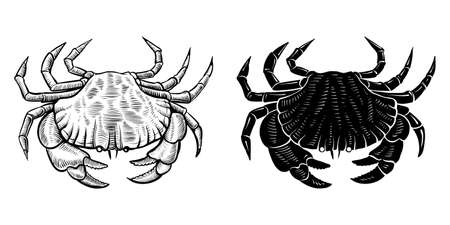Crab vector silhouette and hand drawn vintage illustration.